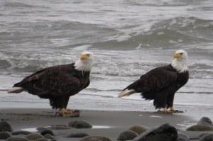 EaglePair