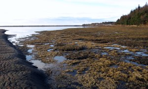 Mud Bay looking west