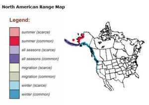North American Range Map for Rock Sandpipers