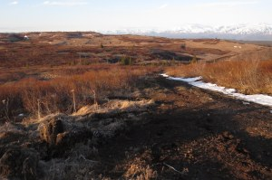 near-bog-1