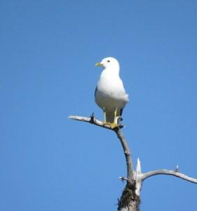 GullSentry