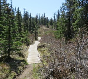 HomesteadTrail-trail-2